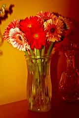 Vase Beauties