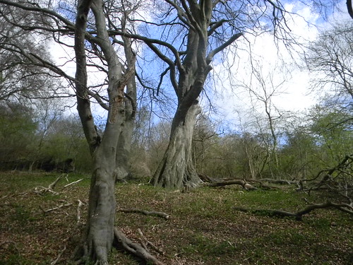 Trees on the Ridgeway