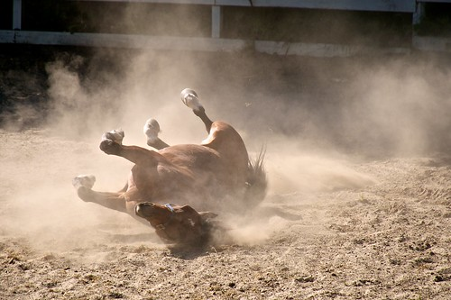 Horse Rolling in the Dust