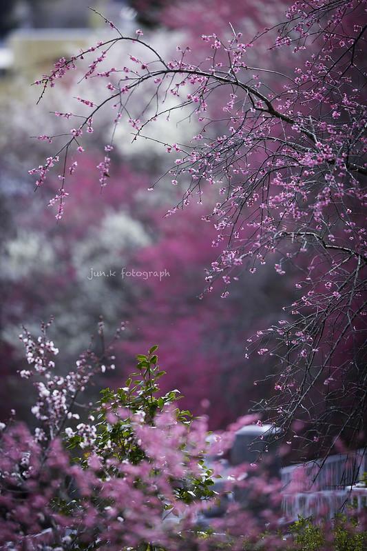 20140321-_DX_3480