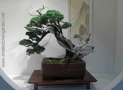 flower(0.0), plant(1.0), sageretia theezans(1.0), houseplant(1.0), bonsai(1.0),