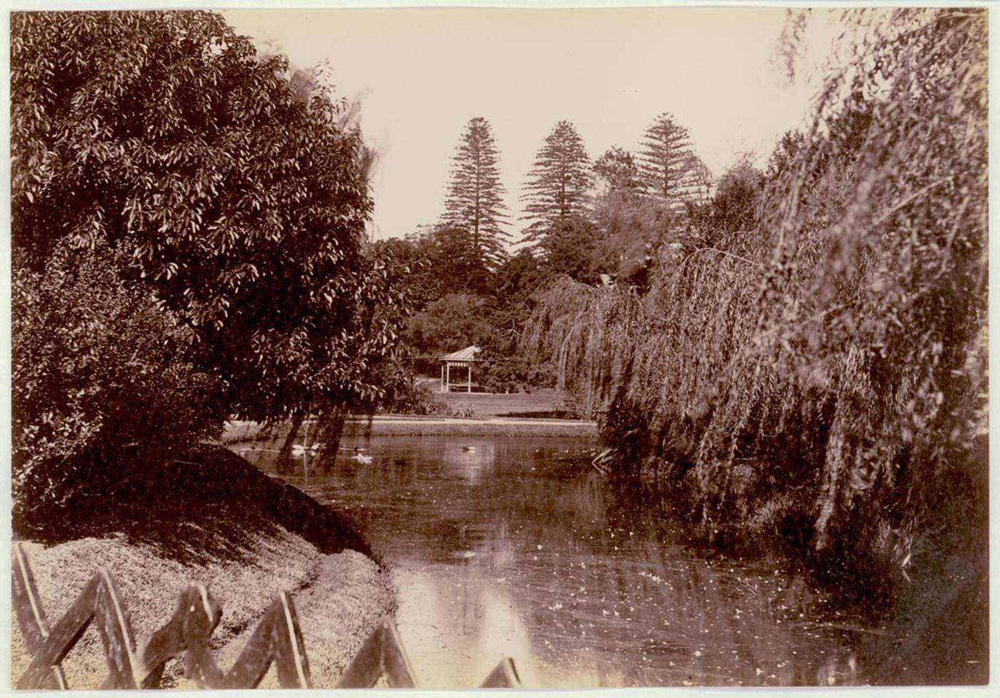 Botanical Gardens, Sydney [showing pond], c. 1900-1910