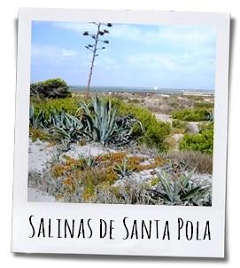 In de Salinas de Santa Pola strijken grote groepen trekvogels neer