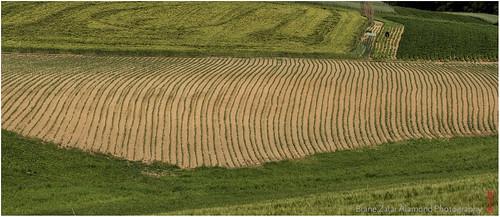green art field lines rural canon landscape is 7d land l usm ef mkii markii 70300 brane llens f456 alamond zalar