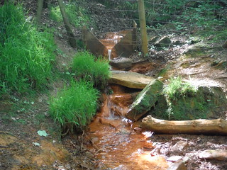 Ochre-coloured Spring, Ecclesall Woods