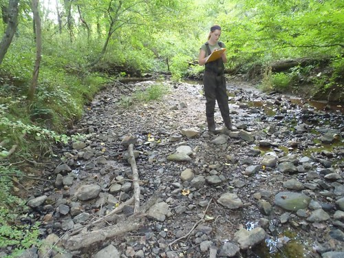 Image of DEP staff taking a pebble count of a stream.
