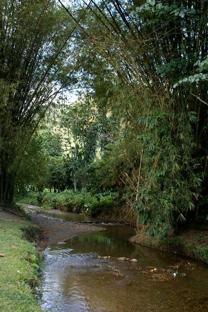 Lopinot River, marsie4004