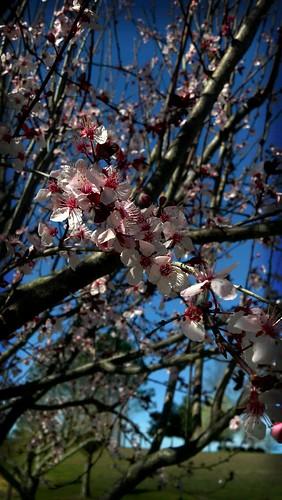 Blossom by juneshin