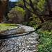 Aravaipa Creek by isaac.borrego
