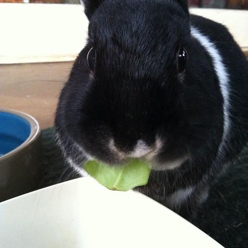 Salad bun!