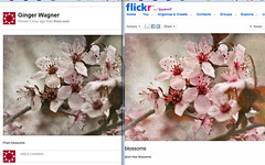 difference in color between Flickr and Pinterest on my computer by msbellee