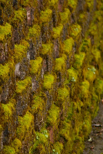 mossy wall  1362