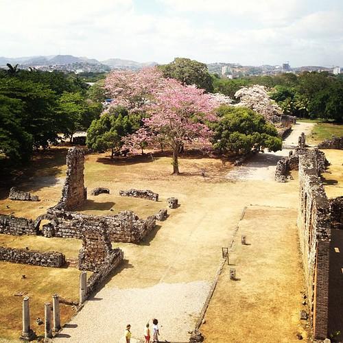 #vista #tower #ruins #ruinas #historical #panamaviejo #igerspanama #centralamerica #ciudaddepanama #panama #vegetation #tree #flowers