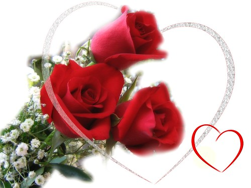 6855768387 36e5774a47 Celebrate Valentines Day with Symbol of Love   The RED ROSES