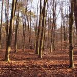 Kafertaler Wald IX KAFERTAL FOREST IX Mannheim DE