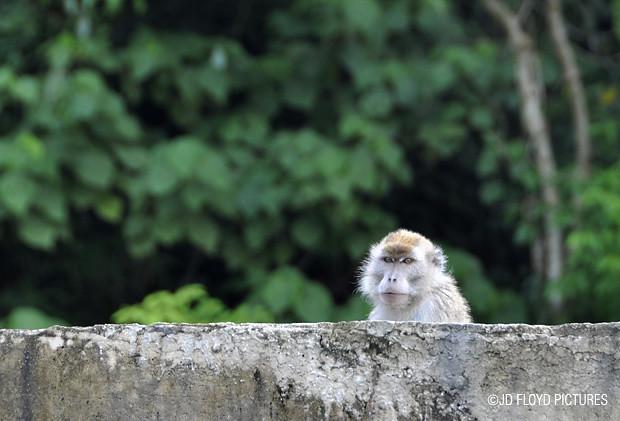 _DSC7023-620 monkey