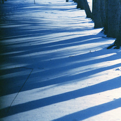 Shadows XVIII