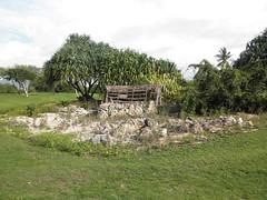ewa beach Golf Club 037