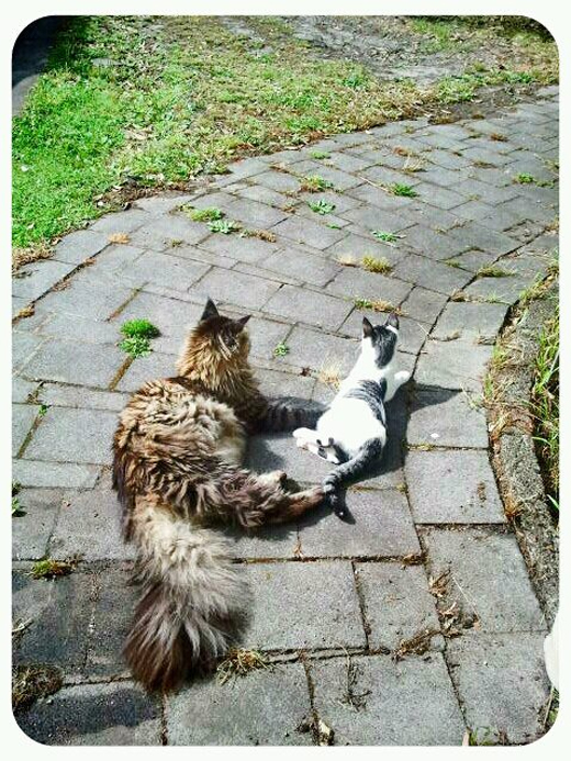 1_Tillie & Zeus