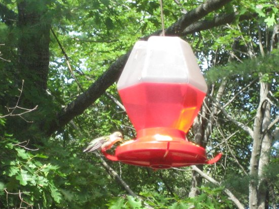 [hummingbird on feeder]