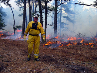 A man in a yellow jumpsuit walks in front of a pine forest with a low fire.