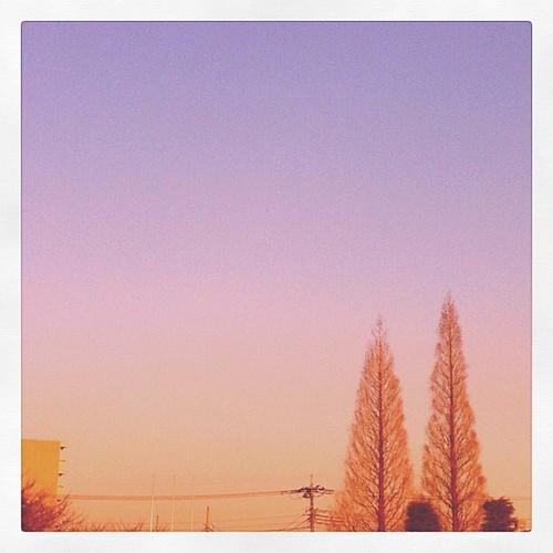 さっきの空。今日もこの木のところまでてくてく歩いてきました。 #イマソラ