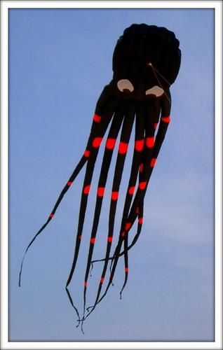 Octopus Kite by Ginas Pics