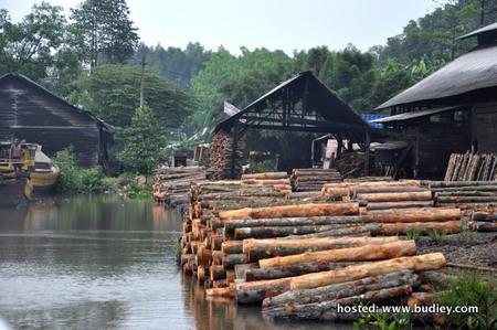 Pembuatan Arang Daripada Kayu Bakau Di Kuala Sepetang
