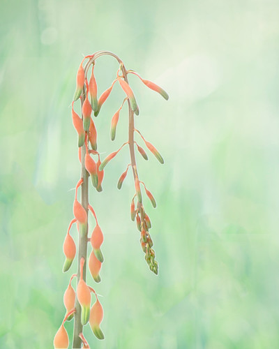 morning pink flowers flower green art nature floral beautiful beauty leaves misty gardens photomanipulation photoshop sunrise garden landscape botanical outdoors photography photo leaf spring saturated flora pretty blossom outdoor blossoms vivid surreal foliage fantasy ethereal bloom blooms dropsofjupiter