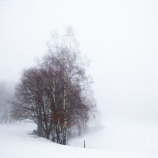 [ a misty winter day ]