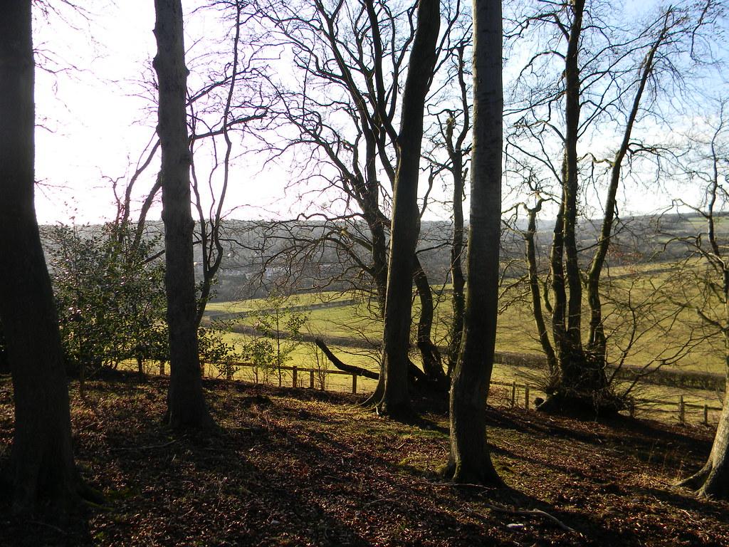 Trees on ridge Near Great Missenden. Chesham to Great Missenden