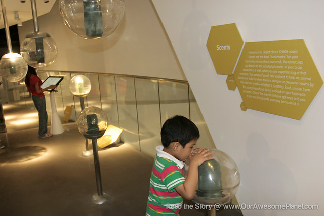 The Mind Museum @ BGC-142.jpg