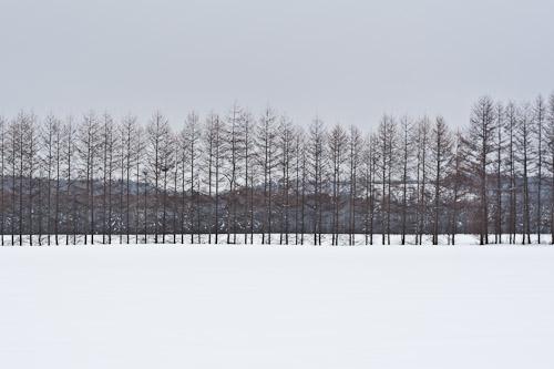 Tree skyline