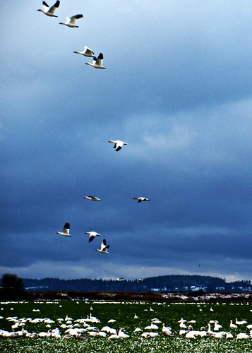 03-19-12 Stormy Takeoff by roswellsgirl