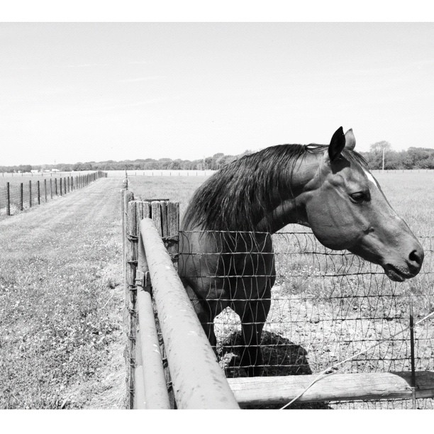Another Day in the Country #horse #blackandwhite #stable