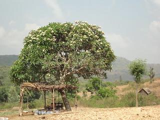 Gulliyada village