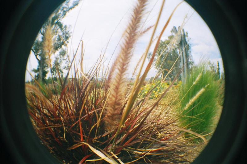 {tall} grass
