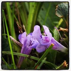 Very small purple flowers