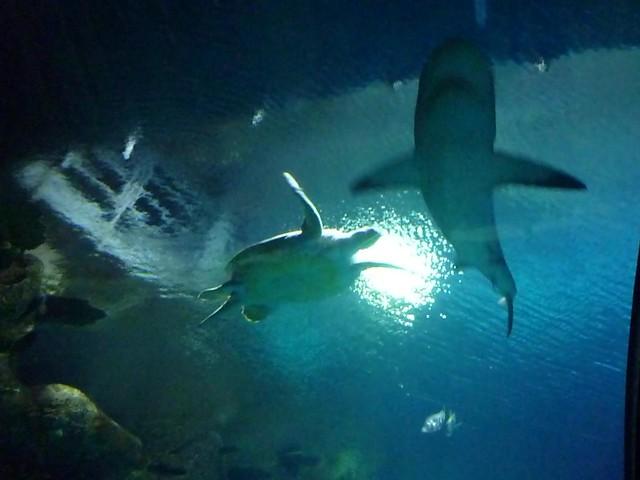 Shark Reef Aquarium At Mandalay Bay Las Vegas Tripomatic