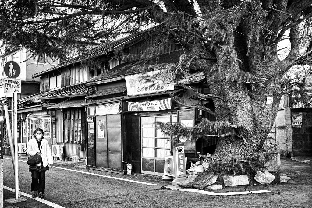 谷中ヒマラヤ杉とミカドパン店
