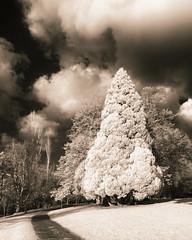 Tree and Path