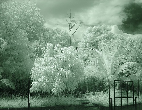 IR: Backyard by Jepster
