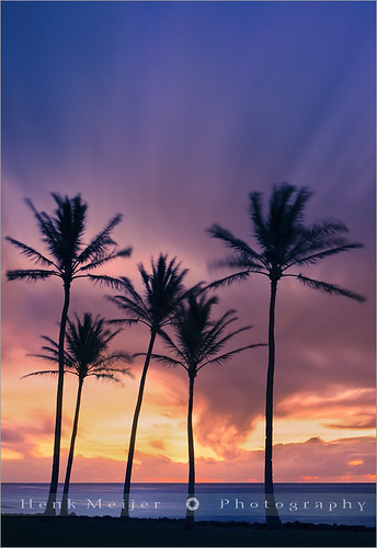 ocean park longexposure trees light sea vacation usa tree beach water clouds america sunrise canon palms landscape lights hawaii morninglight moving long exposure waves view pacific postcard palm palmtrees kauai postcards viewpoint meijer henk kapaa holdiday floydian proframe proframephotography canoneos1dsmarkiii henkmeijer