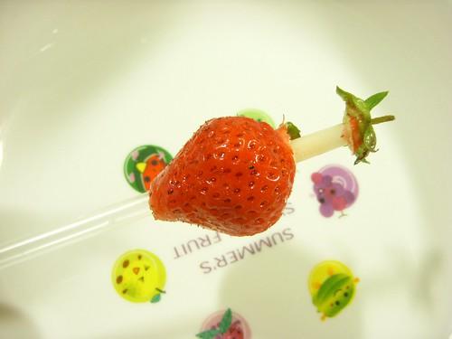 草莓08.JPG