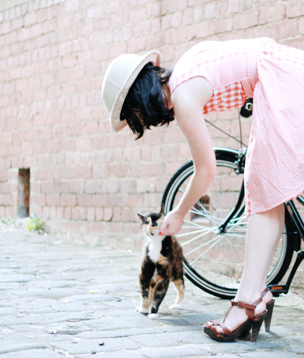 cats bikes gingham a