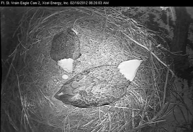 Fort St. Vrain: First Egg 2012