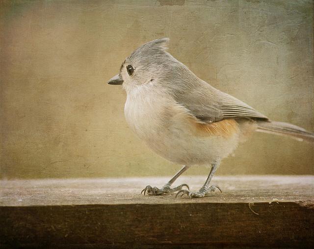 Художественная фотография от Pamela Schmieder
