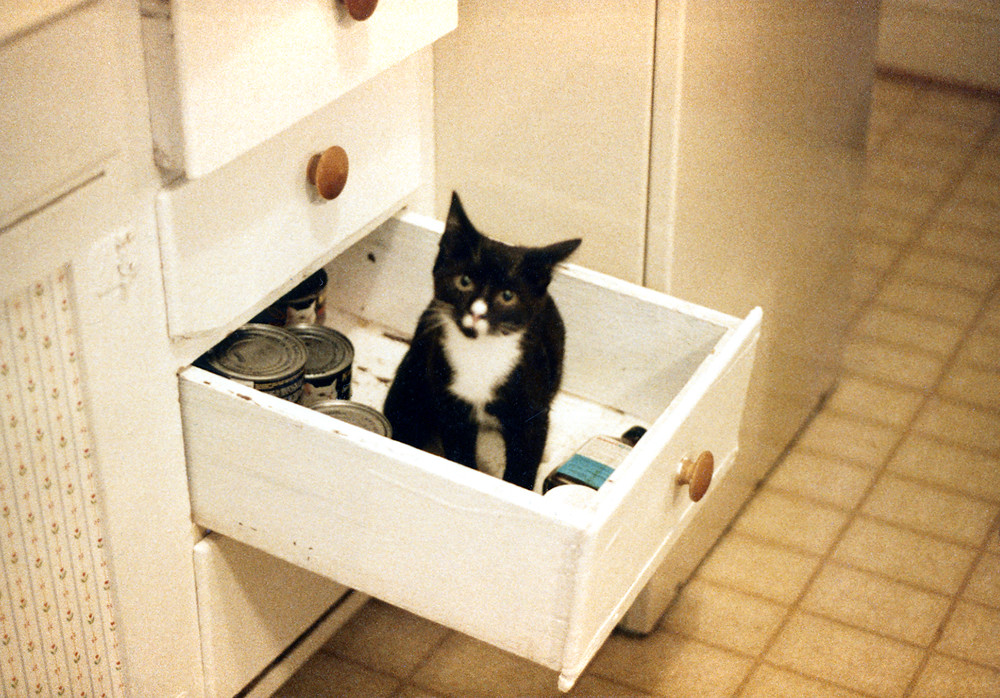 DJ in the catfood drawer