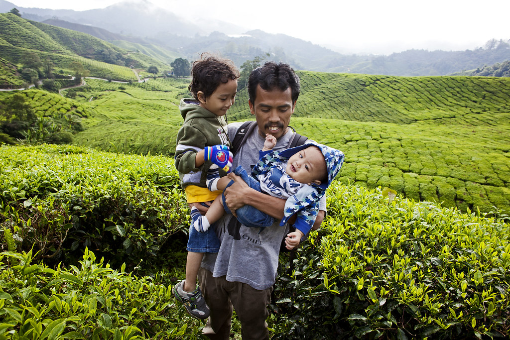 Father and Son | Cameron Highlands | BOH Sungai Palas Tea Estate