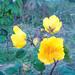 黄色の花 - Kiiro no hana